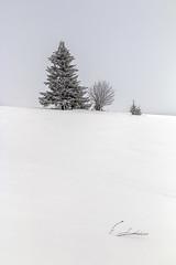 minimalism (Sergey S Ponomarev) Tags: canon eos 70d nature natura minimalism paysage paesaggio russia north nord europe 2017 снег природа пейзаж вятка киров sergeysponomarev ef24105mmf40lisusm winter spring march vyatka kirov art landschaft neve frost