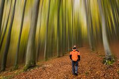 Paseando por el Hayedo Encantado. (Roberto_48) Tags: navarra urbasa hayedo encantado otoño