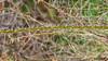 L-A-LUR_1779 (OrNeSsInA) Tags: trasimeno natura byrd airon ornessina aironi uccelli cormorani folaghe lago umbria lucarosi toscana passignano montedellago perugia insetti farfalle nikon tamron
