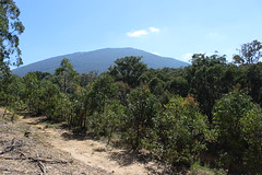Mount Macedon from softwood plantation, Macedon