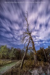 El alma de los árboles (fotochemaorg) Tags: airelibre árbol azul bosque cielo hierba naturaleza noche nocturna nube otoño paisaje
