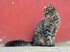 El gat del Guinardó (rferrer7) Tags: cat gat gato portrait red feline felino