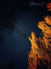 Caminos de Otoño II .... (Blisco_O) Tags: bliscoo art otoño 2017 colors valladolid cyl spain yellow night atardecer xiaomiredminote4 xiaomi composition