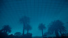 Reflection of Palms (BrianEden) Tags: za pool palmtrees xpro2 reflection fujifilm southafrica travelphotography travel hotel mountnelson fuji travelphotographer capetown mtnelson belmond swimmingpool westerncape