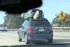Jed Clampet, 2017 (twm1340) Tags: losangeles 2017 ca thanksgiving chevy chevrolet equinox