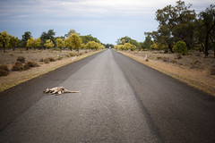 ROAD HAZZARDS (scatrd) Tags: outbacknsw nikon mynikonlife australia rural holiday nsw landscapephotography 2017 road travelphotography travels deadkangaroo newsouthwales jasonbruth outback afsnikkor2470mmf28eedvr country d810 landscape nikond810 cumborah au