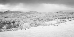 neerim-south-1144-ps-w (pw-pix) Tags: hills slopes trees fences cows grass pasture cattle grazing dam water clouds sky overcast farm farming agriculture rural country landscape bw blackandwhite monochrome sonya7 irconvertedsonya7 850nminfrared ir infrared littlecharlislookout lookout view mainneerimroad neerimsouth shireofbawbaw gippsland victoria australia peterwilliams pwpix wwwpwpixstudio pwpixstudio