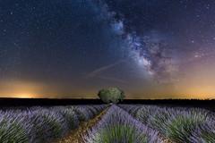 Estrellas y lavanda. Stars and lavender (pitujrg) Tags: lavanda lavender stars estrellas brihuega