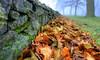 (DeZ - light painter) Tags: royalcitypark guelphcanada leafs stone bokeh nikon nikond610 nikkor nikkor1424mmf28 nature hdr ©dez