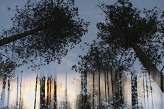 Dibden Enclosure at dusk