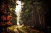 Way out (☺dannicamra☺) Tags: nikon d5100 germany bavaria forest autumn fall november tree woods leaves nature landscape bayern wald herbst natur baum blätter landschaft path laub pfad weg waldweg