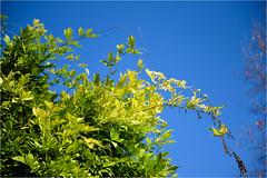 171101 villa pisani 828 (# andrea mometti | photographia) Tags: villa pisani stra colori autunno foglie rosso giallo mometti riviera brenta venezia