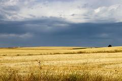 Vacances_5251 (Joanbrebo) Tags: sepúlveda castillayleón españa es segovia antoniomachado camposdecastilla canoneos80d eosd efs1855mmf3556isstm autofocus landscape nature naturaleza natura nubes nuvols nuages clouds