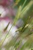 Zealandia (whitebear100) Tags: zealandia 2017