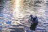 El perro del agua (Wal Wsg) Tags: perro dog agua water lake lago 7dfw phwalwsg