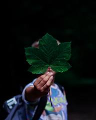 Leaf Face (jamiebright11) Tags: portrait leaf moody portraiture boy natural light canon1300d 50mmprime prime