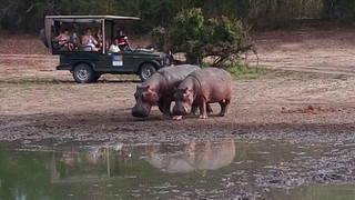 Africa Safari Safari