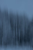 winter forest (sami kuosmanen) Tags: intentionalcameramovement icm blur blue bluring finland forest suomi sky snow tree talvi winter white kuusankoski kouvola creative luonto light landscape long lumi europe exposure expression emotion eerie abstract art puut linjat