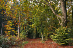 Beginning of autumn in the forest (Jessie van Weert) Tags: wonderful wideangle warm wide wolken explore extreme extreem trees tree yellow dynamic mysterious dynamisch day uitzicht outdoor outside sun sunshine interesting impressive incredible nikon d3100 nice light field photography plant plants adorable atmosphere staatsbosbeheer sigma depthoffield depth dof flickr fotografie fabulous gorgeous green groothoek holland bijzonder landscape landschap licht zon view veld beautiful blue netherlands nature ngc natuur natuurgebied natuurmonumenten magical sky heide heath grass forest park autumn herfst bos