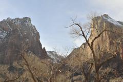 Zion in Winter Light   NIKON D3099-1 (izurutoki) Tags: zionnp americannationalpark winterlight utah southwest canyon spirituallandscape unusualphotosofnationalparks