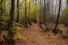 Leaves, Breath, Walk (Jethro_aqualung) Tags: via degli dei d3100 nikon wood nature natura autumn autunno path italy