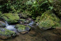 River Bush (Argyle Fan) Tags: river bush green rocks longexposure slow nature forest nd