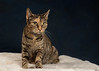 'Martha' (Jonathan Casey) Tags: rescue cat catchums chums norfolk portrait nikon d810 sigma 50mm f14 art