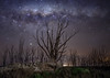 From the ruins (karinavera) Tags: city longexposure night photography cityscape ilcea7m2 ruins epecuen tree buenosaires abandoned sky milkyway