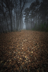Light Stalking (shanahanphotography) Tags: landscape winter nature northcarolina beauty lake fall orange clouds longexposure leaves blue trees wildlife wakeforest raleigh flowersplants spooky beautiful nc green foggy fog firstinflight fallslake