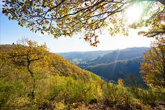 Herbstmoselwald (Torsten Frank) Tags: baum burg cochem deutschland eifel herbst herbstlaub laub mittelgebirge moseleifel osteifel reichsburgcochem rheinlandpfalz wehrbau