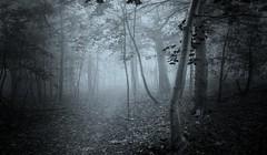 brume sur la montagne (cébé céline) Tags: paysage forêt automne sentier brume brouillard branches arbres montréal matin bois stratus mountain morning path forest wood trees foggy nb bw nikond7200 montroyal