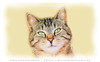 gatto-oilp (Cristian Ferronato) Tags: doyoulikemyphoto dylk doyoulikemyart gatto cat animali digitalpaint digitalart pittura paint digitale