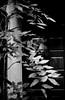 皮相 (the surface) (Dinasty_Oomae) Tags: フォクトレンダー voigtlaender ビトマチック vitomatic ビトマチックiia vitomaticiia 白黒写真 白黒 monochrome blackandwhite blackwhite bw outdoor 東京都 東京 tokyo 江東区 kotoku 深川 fukagawa