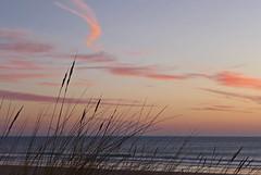 The Last Gift (TablinumCarlson) Tags: europa spanien espania espana spain andalusien andalusia chiclana de la frontera barrosa novo sancti petri costa luz gulf cádiz playa lido beach strand leica dlux 6 sonnenuntergang sunset sun meer atlantic sea wolken clouds himmel ozean wasser welle sand gras pflanzen gräser