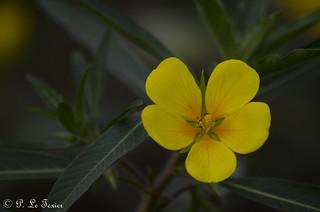 Fleurs 015