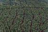 Skane_170801-7327.jpg (perpixel.se) Tags: sss sösdala skog flygfoto 3 björkeberga granar skåne sverige swe
