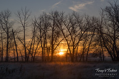 November 11, 2017 - A nice looking sunrise at the Rocky Mountain Arsenal. (Tony's Takes)