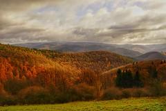 Eifellandschaft bei Reifferscheid (clemensgilles) Tags: rheinlandpfalz deutschland landscape germany foret forest wald wälder tree fall herbst autumn eifellandschaft eifel