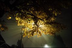 (gilbert terrazas) Tags: leica 28mm m voigtlander fog low light stream iso fall night portland oregon pnw pacific northwest incoming
