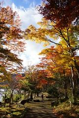 Autumn leaves of lakeside (huzu1959) Tags: a7ii alpha7ii sonya7ii alphaa7ii sonyalpha7ii sonyalphaa7ii sony hakone japan kanagawa autumn