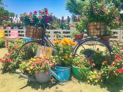Bike at the Garden (M Esposo) Tags: garden flower colorful bike sunny hot noon sony philippines pangasinan color flowers grass tayug nature green