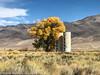Owens Valley-51 (Denise Noelle Photography) Tags: owensriver bishopca sierranevadamountains monolake lonepine junelake mammothlakes