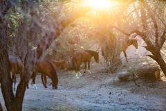 1711 Butcher Jones30 (nooccar) Tags: 1711 dcaphotos arizona devonchristopheradams nov2017 november saguarolake saltriver adventure devoncadamscom outdoors photowalk wanderlust