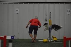 DSC_6667 (jaimekay16) Tags: dog agility k9x k9 xpress leander texas