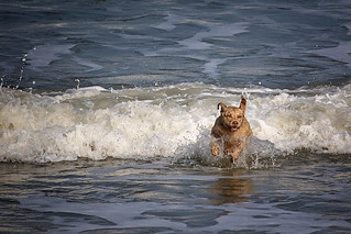 the dog who loved the sea