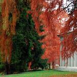 "Cincinnati – Spring Grove Cemetery & Arboretum ""Fleischman Mausoleum With Autumn Blanket"