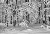 (Djordje Petrovic) Tags: serbia srbija winter snow blackandwhite monochrom nature mountain tree zima goč vrnjackabanja tokina1224mm tokina nikond80 nikon day frozen
