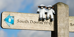 Dale and Ewe-Jean arrive in Sussex (Explored) (hehaden) Tags: sheep toy sign signpost direction footpath bluesky clouds southdownsway downs southdowns sussex
