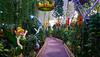 Dubai Butterfly Garden (Irina.yaNeya) Tags: dubai uae emirates park garden nature sculpture art light plants trees flowers path dubái eau parque jardín naturaleza escultura arte luz plantas árboles flores camino دبي الامارات حديقة منتزه طبيعة طريق فن ضوء نباتات أشجار زهور дубаи оаэ эмираты парк сад цветы скульптура свет деревья растения дорожка sony