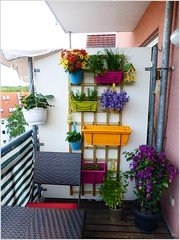 Vertical Garden Designs with Planters in Cheerful Colors (kreatecube) Tags: kreatecube interiordesign interiordesigns tinybalcony balcony balconydecor topinteriordesignersdelhi topinteriordesignersindia